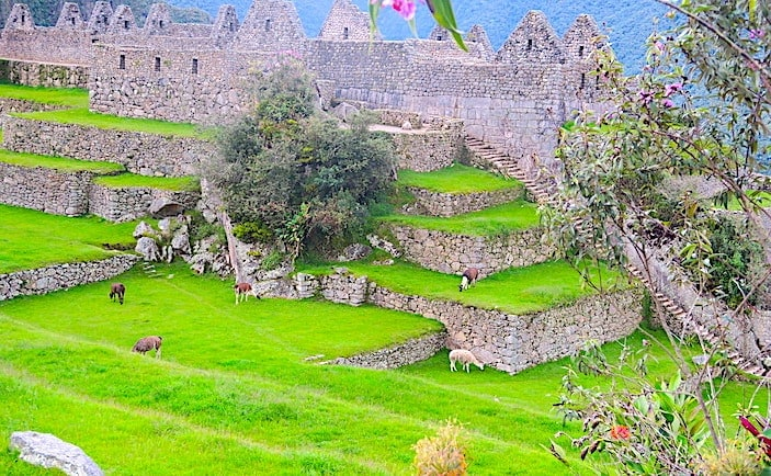 マチュピチュ遺跡の画像