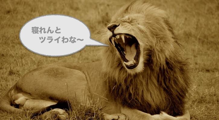 ライオンのあくび