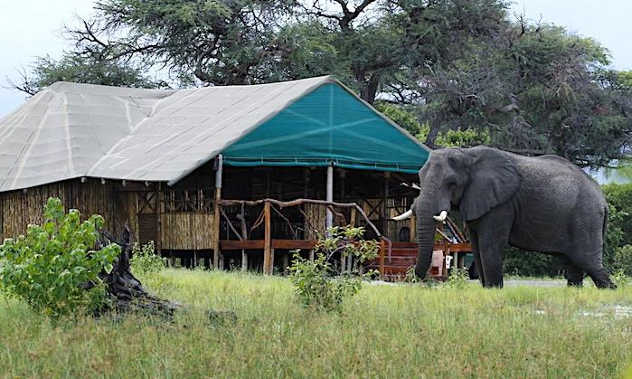 サファリテントのすぐ前を行く象