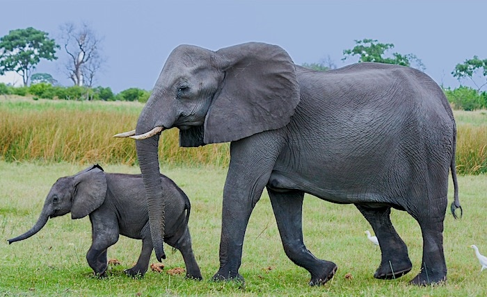 ボツワナ・サファリで見た象の親子